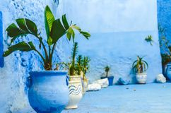 Plant with blue walls royalty free stock photography