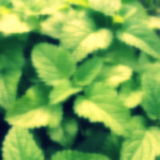 plant with blurred effect background Royalty Free Stock Photo