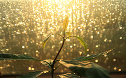 Plant with bokeh lights. Growing plant with bokeh lights stock images