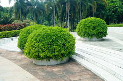 Plant bonsai in the park Stock Photo
