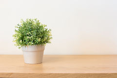 Plant on book shelf. Or desk with copy space Royalty Free Stock Photography
