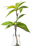 Plant in the bottle. Concept stock image