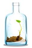 Plant in bottle Stock Photos