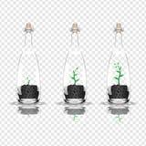 Plant in a bottle. Vector stock illustration. royalty free illustration