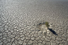 Plant at the bottom of a dried up lake. Lonely plant at the bottom of a dried up lake in the Namib desert Royalty Free Stock Images