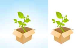 Plant Box Stock Images