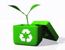 Plant into a box of recycling Stock Images