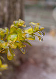 Plant Branch Covered with Ice Royalty Free Stock Image