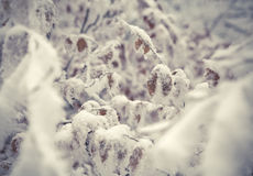 Plant branch under the snow, natural vintage winter background, Stock Photos