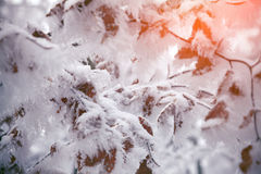 Plant branch under the snow, natural vintage winter background Stock Image