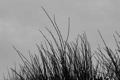 Plant branches gray sky Stock Photos