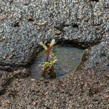 The plant breaks through  asphalt Stock Images