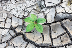 Green plant breaks through the ground Stock Images