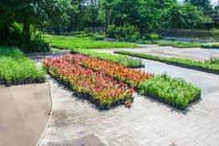 Plant Breeding Royalty Free Stock Image