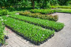 Plant Breeding Royalty Free Stock Photos