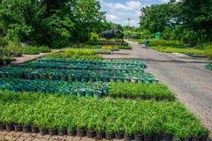 Plant Breeding Stock Image