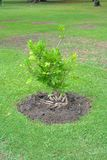 Plant Breeding Stock Photography