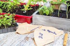 Plant breeding, seedlings Stock Images