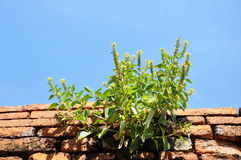 Plant on the brick. Royalty Free Stock Images