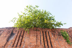 Plant on brick old wall background Stock Images
