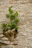 A plant on a brick wall Stock Photo