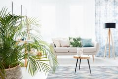 Plant in bright living room. With wooden table on a carpet and lamp next to a sofa with floral pillow stock images