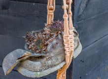 Plant in a brown shoe hanging in front of a cabin royalty free stock photography