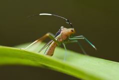 Plant bug Stock Image