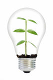 Plant in a bulb Royalty Free Stock Photos