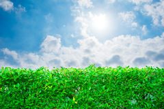 Plant bush and cloudy summer sky Stock Image