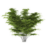 Plant bush isolated Royalty Free Stock Images