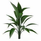 Plant bush isolated Royalty Free Stock Images