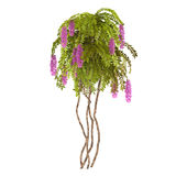 Plant bush with pink flowers isolated Royalty Free Stock Image