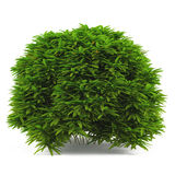 Plant bush . Stock Images