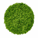 Plant bush top isolated. Royalty Free Stock Image