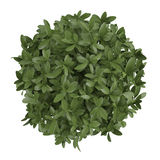 Plant bush top isolated Royalty Free Stock Images