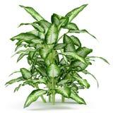 Plant bush tree Royalty Free Stock Photos