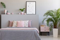 Plant and cabinet next to bed with pillows in grey and pink bedroom interior with poster. Real photo royalty free stock image