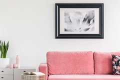 Plant on cabinet next to pink settee in white living room interior with poster and book. Real photo royalty free stock photography