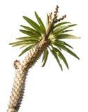 Plant cactaceae Stock Photos