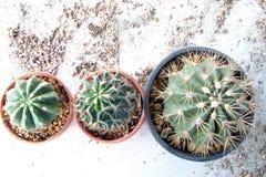 Plant_cactus Imágenes de archivo libres de regalías