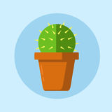Plant the cactus in a pot on a blue background Stock Image