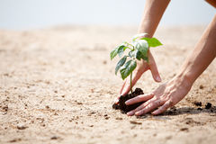 Plant care Stock Photography