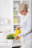 Plant Care Stock Images