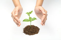 Plant care Royalty Free Stock Image