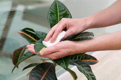 Plant care Stock Image