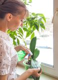 Plant care orchids. Treatment of plants against parasites. Plant care orchids. Treatment of plants against parasites Royalty Free Stock Image