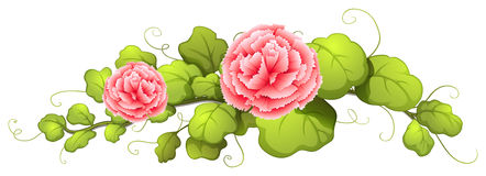 A plant with carnation pink flowers Royalty Free Stock Photo