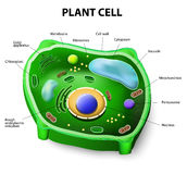 Plant cell anatomy Stock Photos