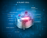 Plant Cell background Stock Photography